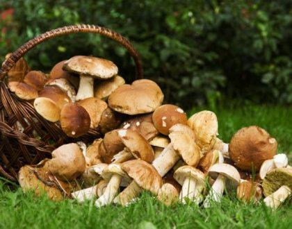 Etna, funghi ed escursioni