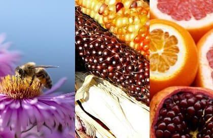 Biodiversità: il primato italiano e siciliano.